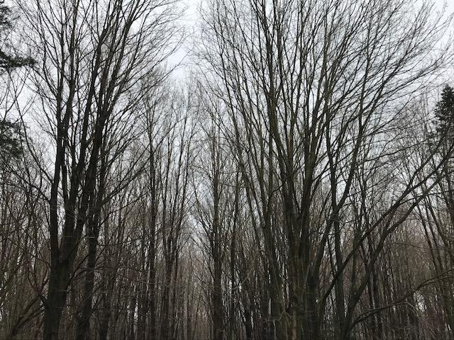 IMG_0449 Gray woods 1