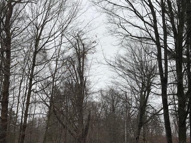 IMG_0450 gray woods 2